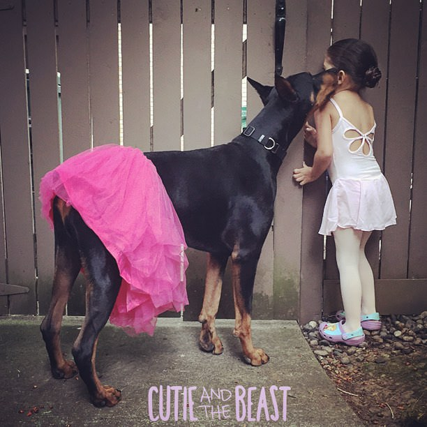 cutie-and-the-beast-dog-and-girl-doberman-best-friends-7