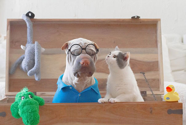shar-pei-dog-and-cat-best-friends-magical-pictures-2
