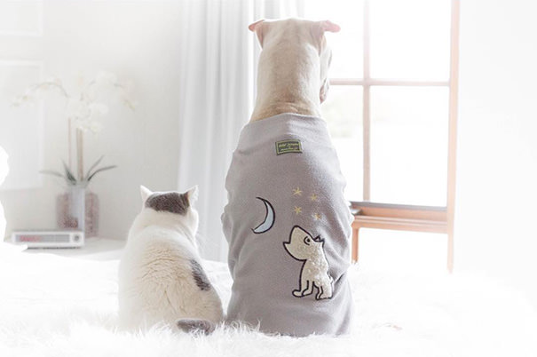 shar-pei-dog-and-cat-best-friends-magical-pictures-5