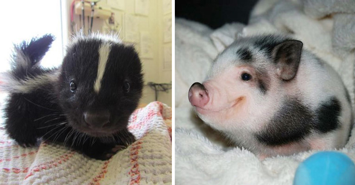 29 Of The Most Adorable Baby Animals | Top13