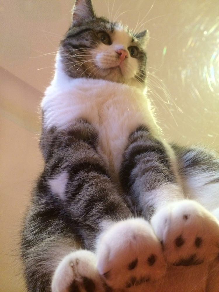 adorable-cats-on-glass-1