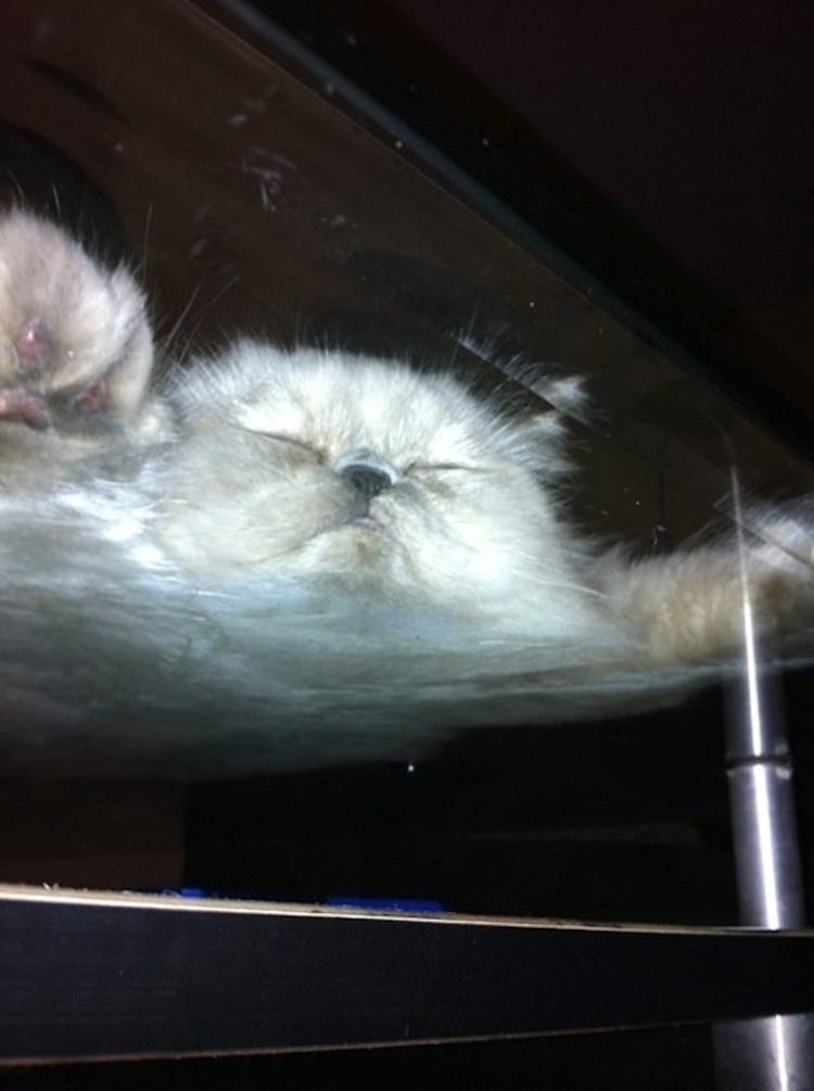 adorable-cats-on-glass-4