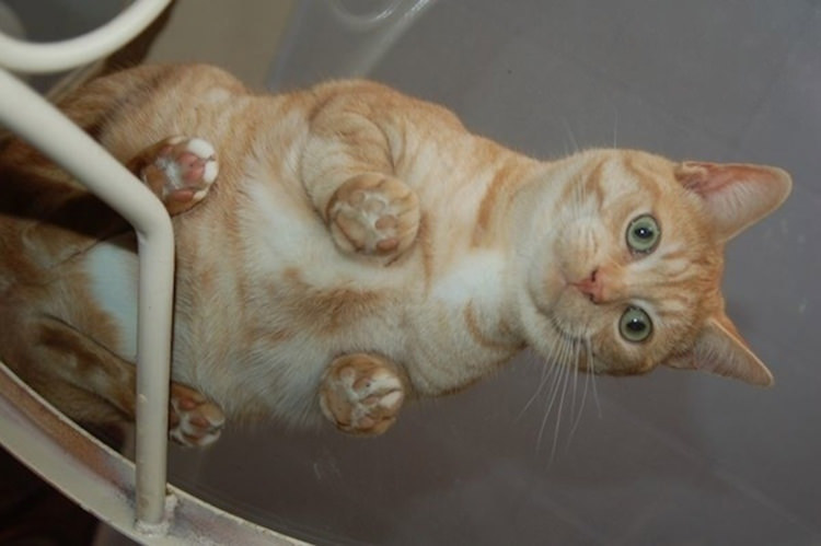 adorable-cats-on-glass-5