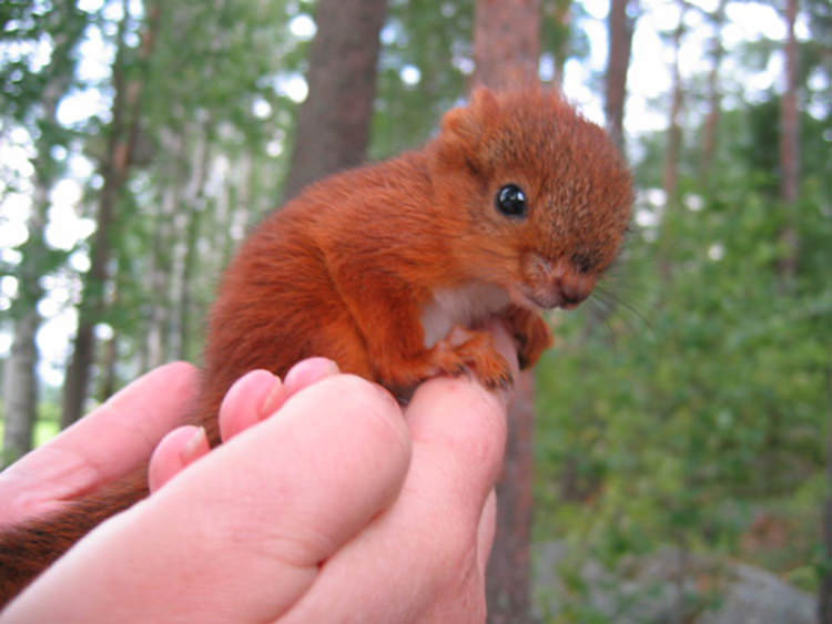 adorable-small-animals-1