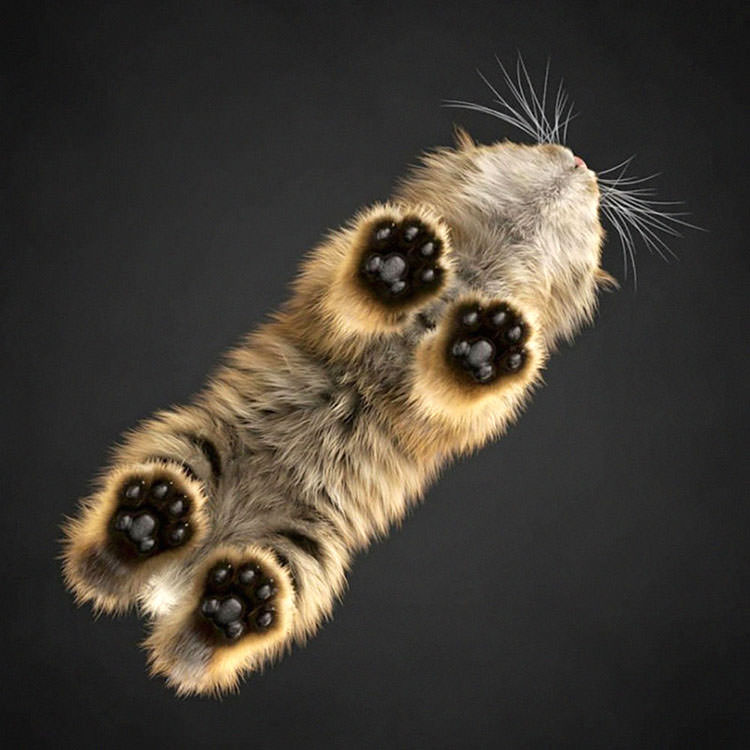 cats-sitting-on-glass-6