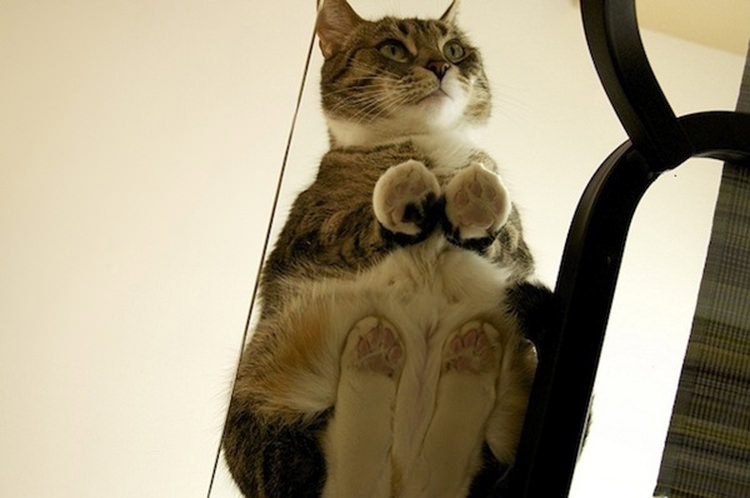 cute-cats-on-glass-1