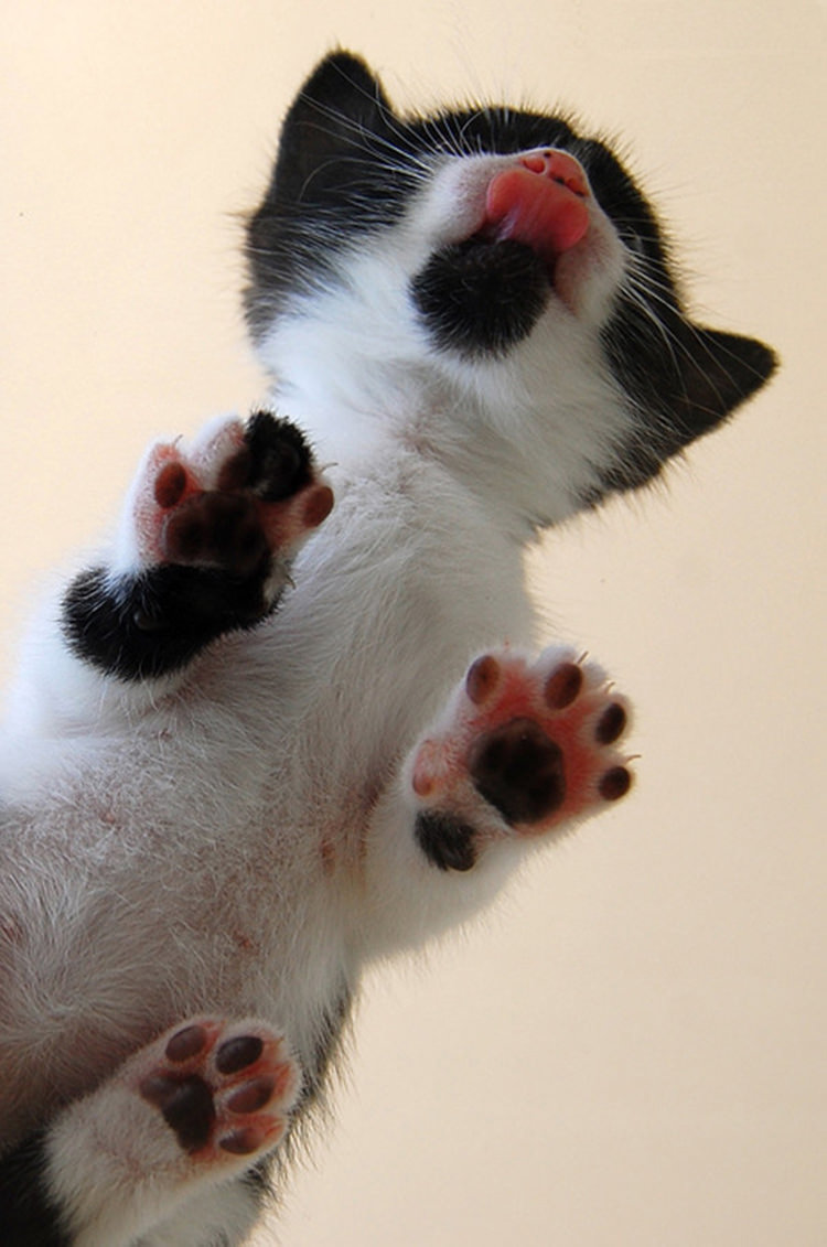 cute-cats-on-glass-2