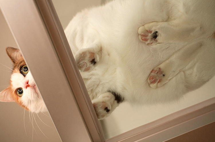 cute-cats-on-glass-3