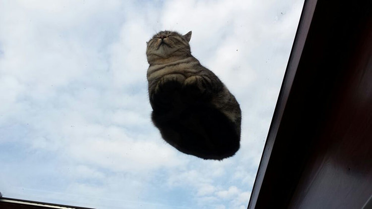 cute-cats-on-glass-5