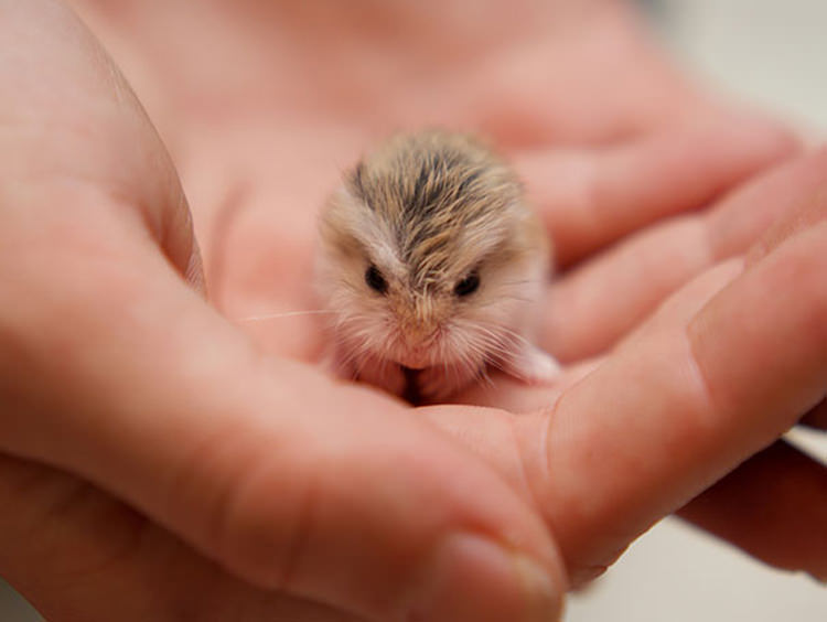 cute-small-animals-1