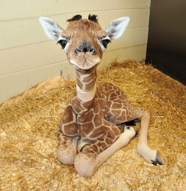 cutest-baby-animals-6