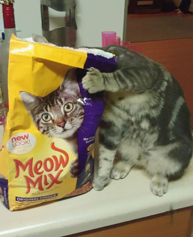 perfectly-timed-funny-cat-pictures-1