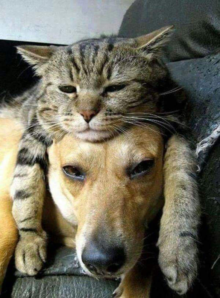adorable-cats-sleeping-on-dogs-3