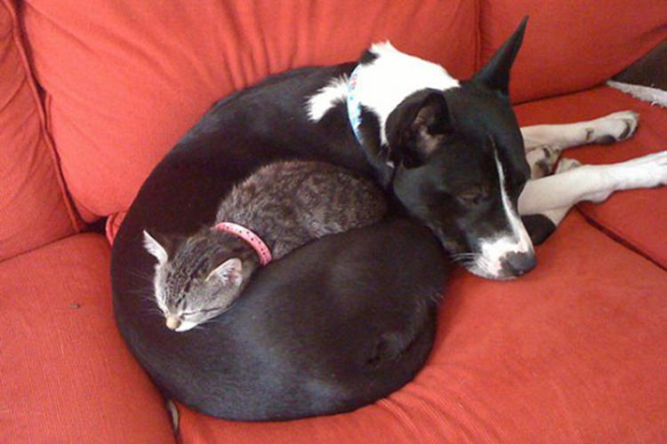 cat-and-dog-friends-1