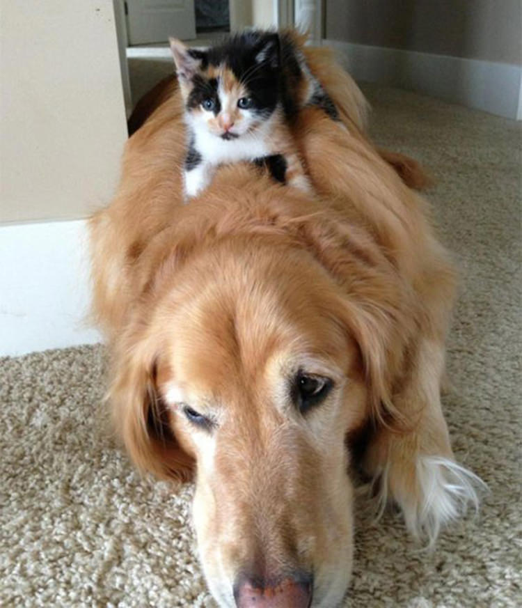 cat-and-dog-friends-2