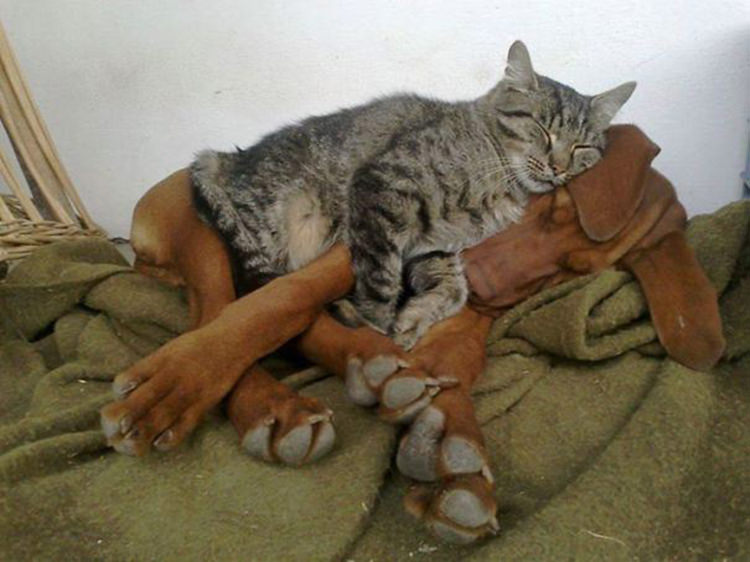 cat-and-dog-friends-3