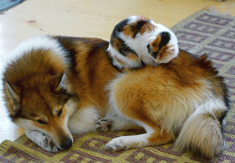 cats-sleeping-on-dogs-3