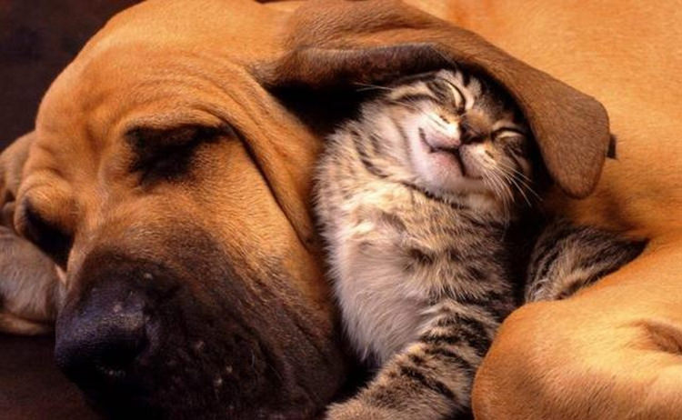 cute-cats-on-dogs-1
