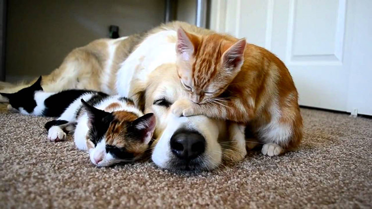 cute-cats-on-dogs-2
