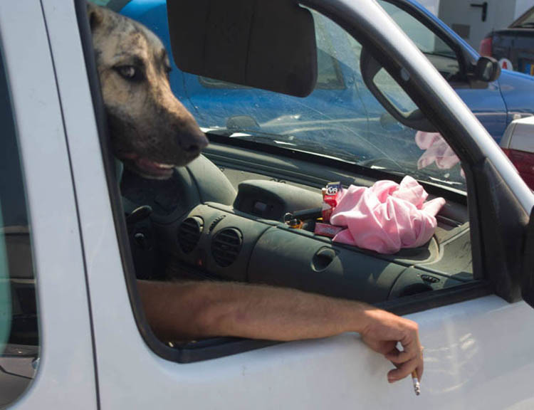 36 Funny Dog Pictures Taken At The Right Time Top13