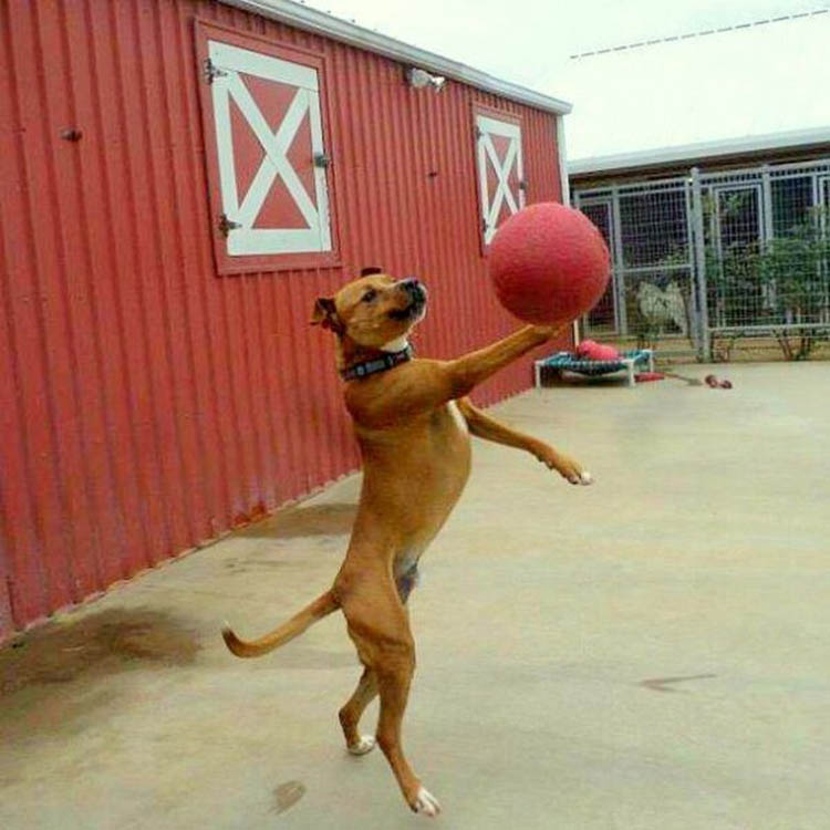 perfectly-timed-dog-photos-1