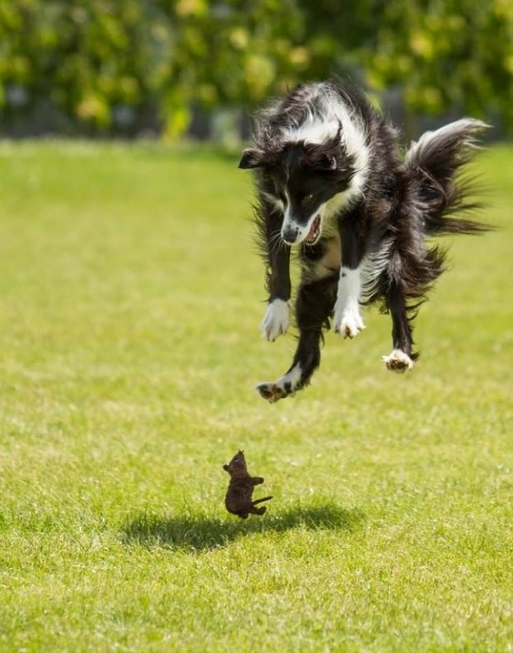 perfectly-timed-dog-photos-2
