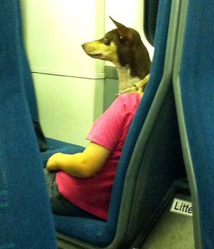 perfectly-timed-dog-photos-3
