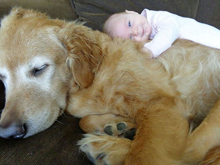 adorable-kids-with-dogs-3