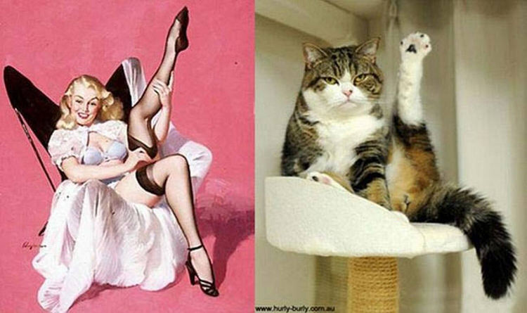 cats-paired-with-pin-up-girls-4