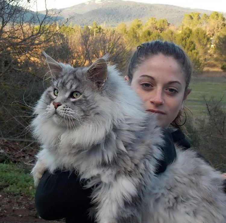 huge-maine-coon-cats-15