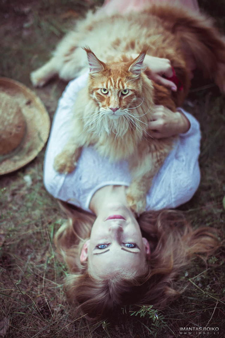 huge-maine-coon-cats-16