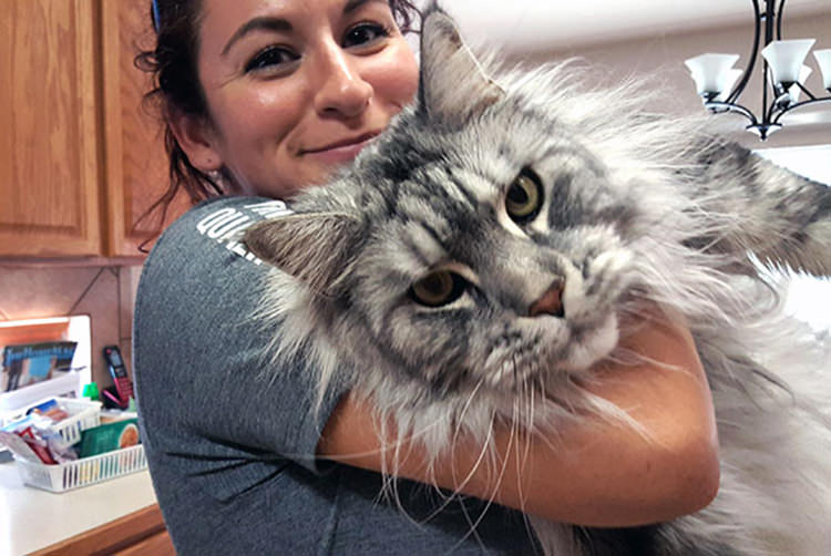 huge-maine-coon-cats-4