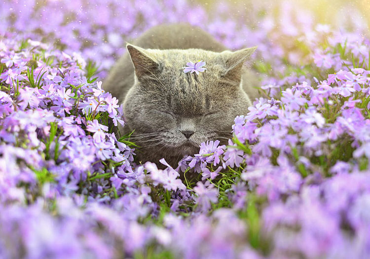 adorable-animals-photos-sniffing-flowers-1