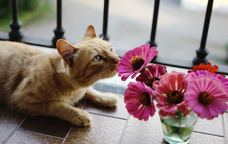 adorable-animals-photos-sniffing-flowers-2