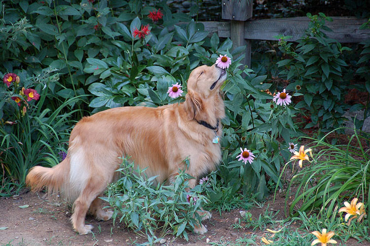 adorable-animals-photos-sniffing-flowers-4