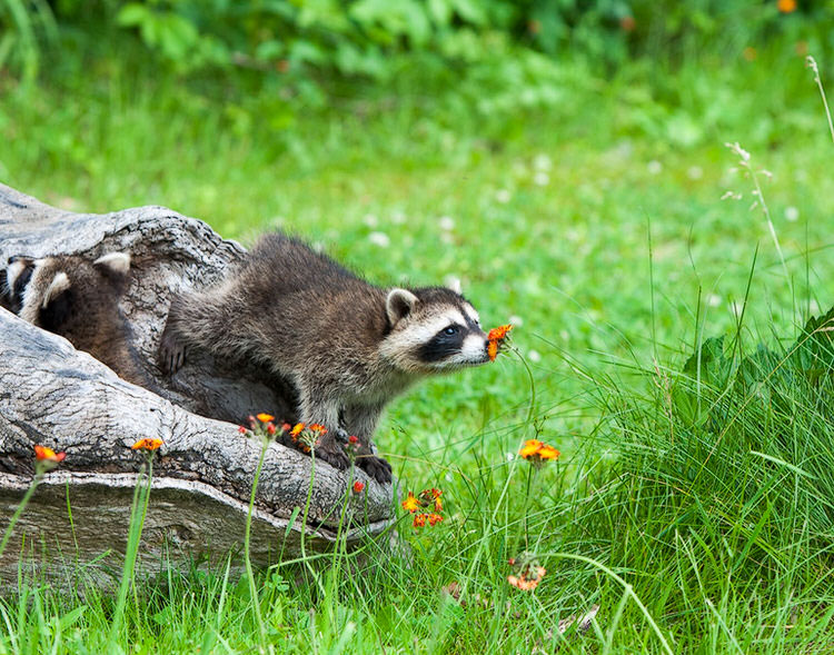 adorable-animals-photos-sniffing-flowers-5