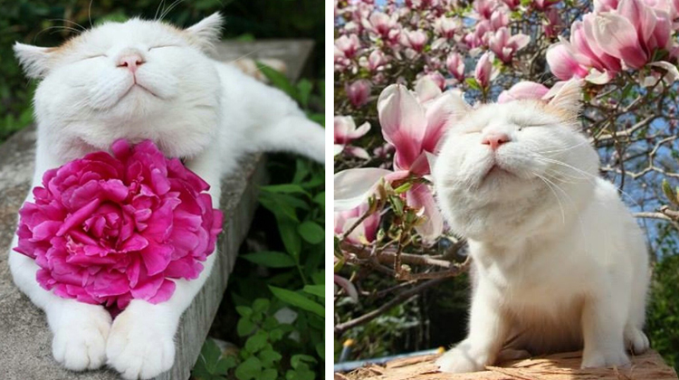 22 Adorable Animals Sniffing Flowers