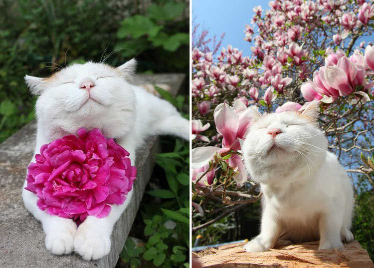 animals-pictures-sniffing-flowers-2