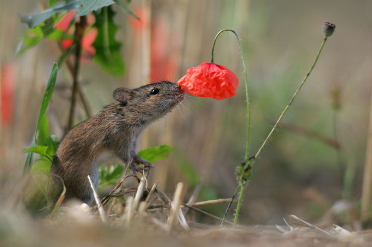animals-pictures-sniffing-flowers-4