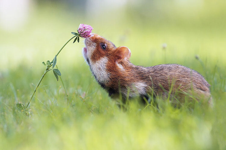 animals-pictures-sniffing-flowers-5