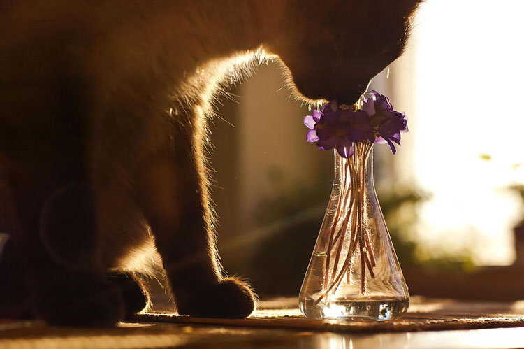animals-smelling-flowers-1