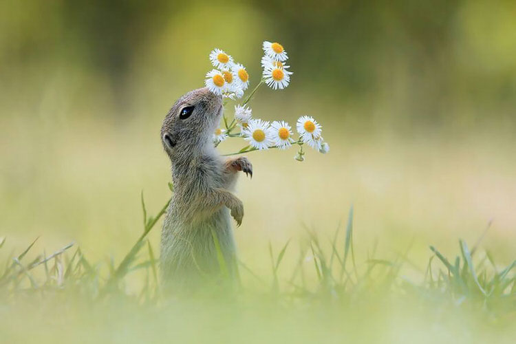 animals-smelling-flowers-3