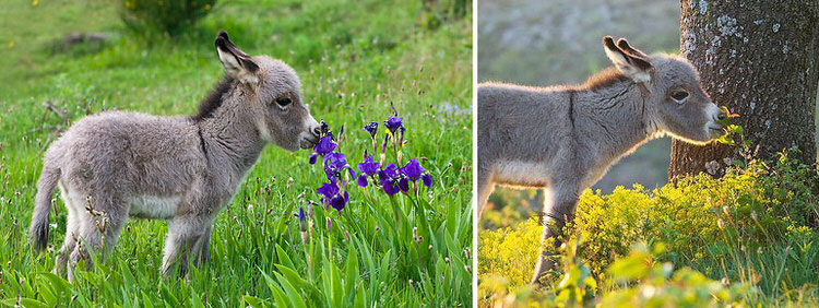 animals-sniffing-flowers-1