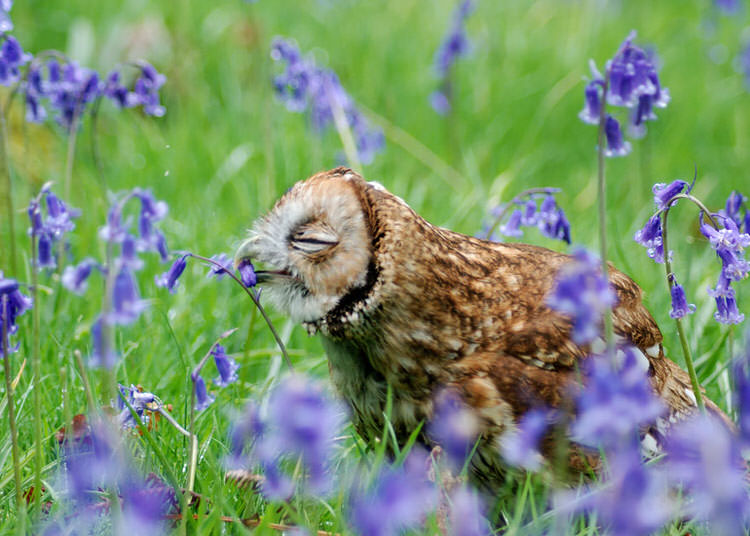 animals-sniffing-flowers-3