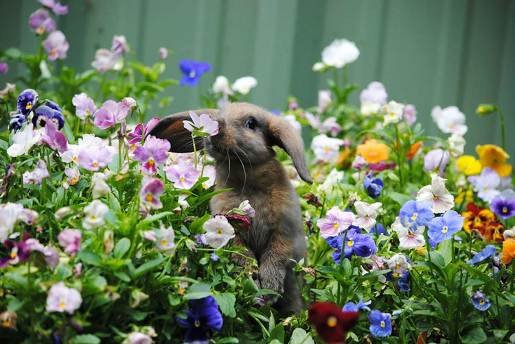 animals-sniffing-flowers-4