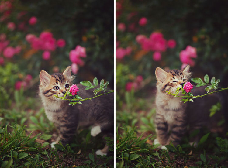 animals-sniffing-flowers-5