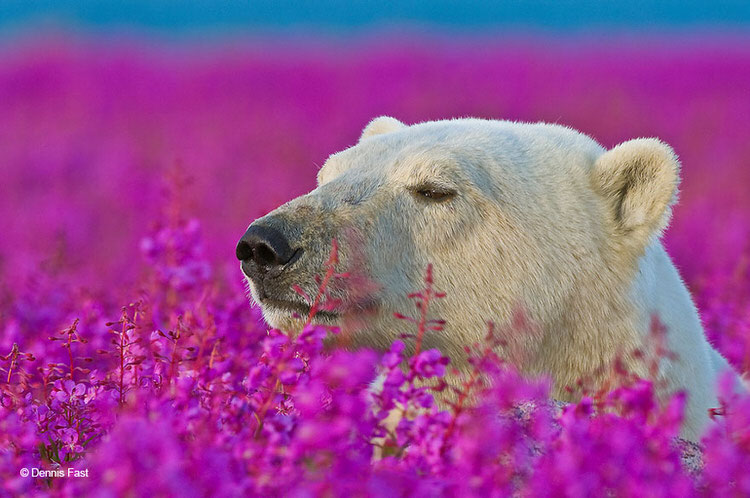 cute-animals-photos-smelling-flowers-1
