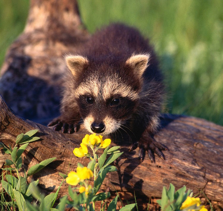 cute-animals-photos-smelling-flowers-2
