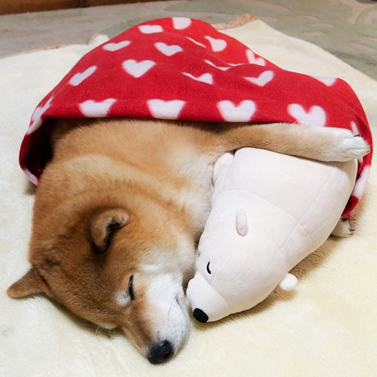 dog-shiba-inu-sleeps-same-position-stuffed-animal-9