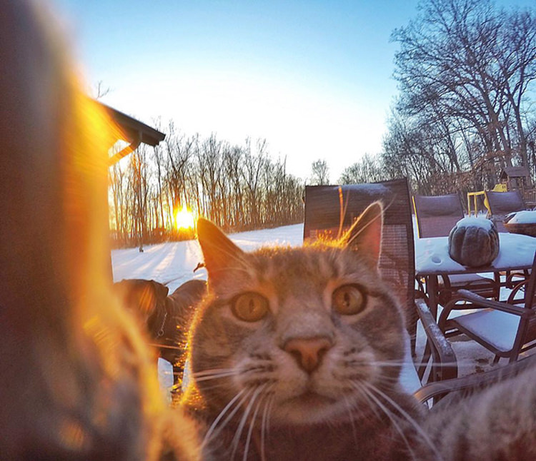 manny-cat-takes-selfies-gopro-1